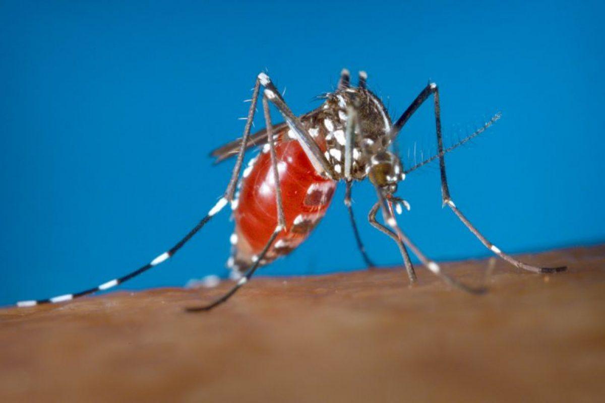 Signos y síntomas del virus Zika Foto:AP. Imagen Por: