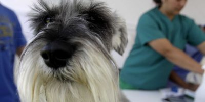 Diputada Rubilar y polémica entre ISP y veterinarios: hablan