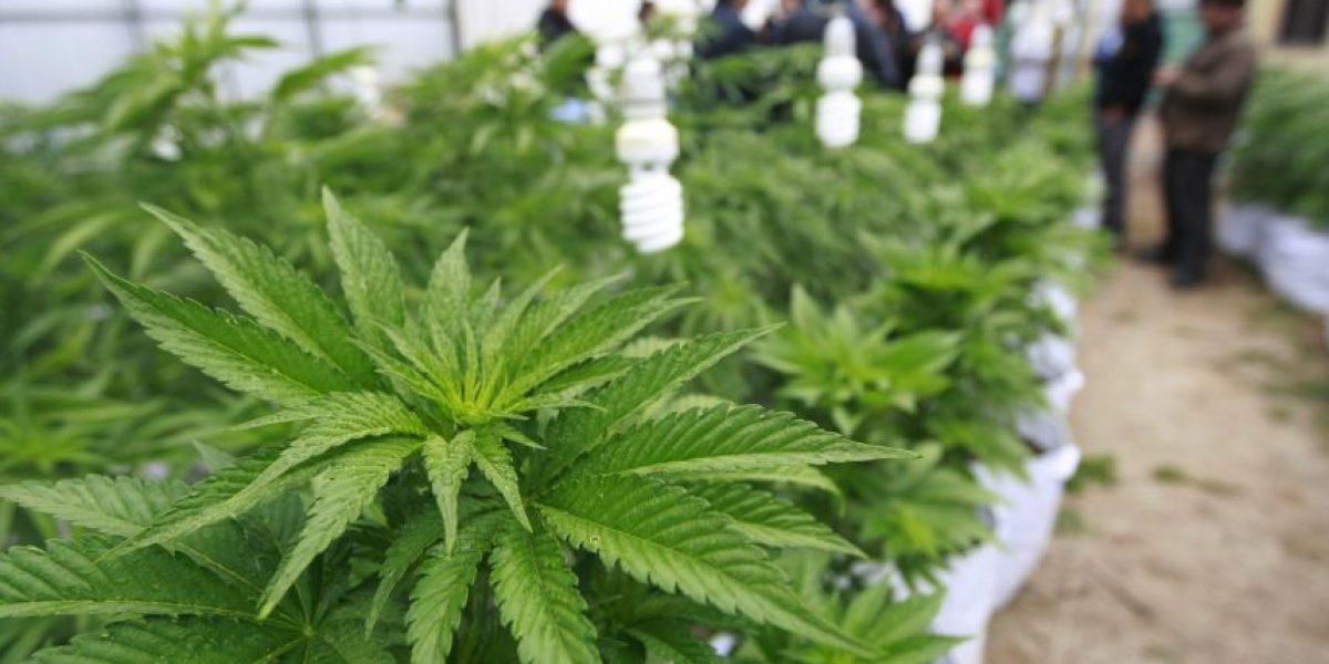 Fundación Daya pide revisar accionar policial tras incautación de cannabis medicinal a paciente