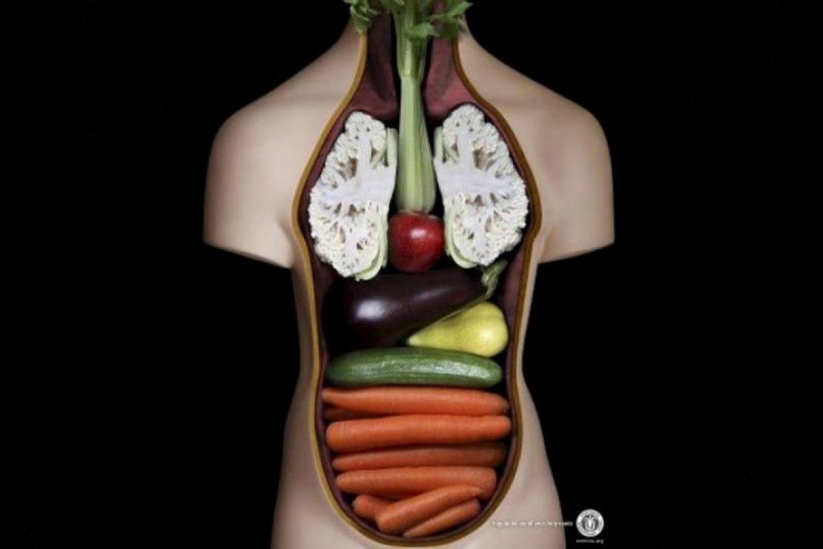 """""""Los vegetarianos indicaron que podrían tener una peor condición física, más restricciones de salud y un incremento en sus alergias; Foto:Tumblr. Imagen Por:"""