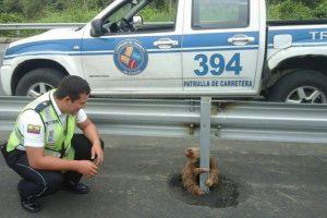 Los perezosos son una especie que vive en las selvas húmedas de Centro y Sudamérica. Foto:Vía facebook.com/ctecuador. Imagen Por: