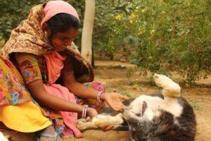 Así está después de tres meses. Foto:vía Facebook/Animal Aid Unlimited. Imagen Por: