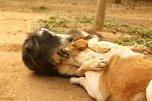 Kalu ahora es un perrito normal. Foto:vía Facebook/Animal Aid Unlimited. Imagen Por: