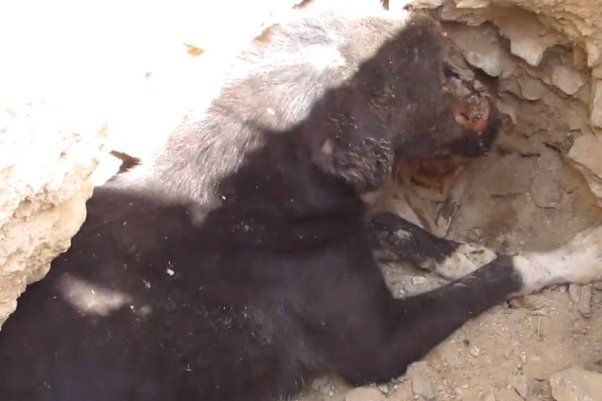 Lo dejaron ahí para morir. Foto:vía Facebook/Animal Aid Unlimited. Imagen Por: