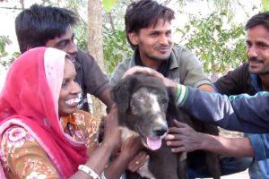 El equipo lo logró. Foto:vía Facebook/Animal Aid Unlimited. Imagen Por: