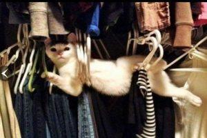 10 graciosos momentos de gatos en Internet Foto:reddit.com. Imagen Por: