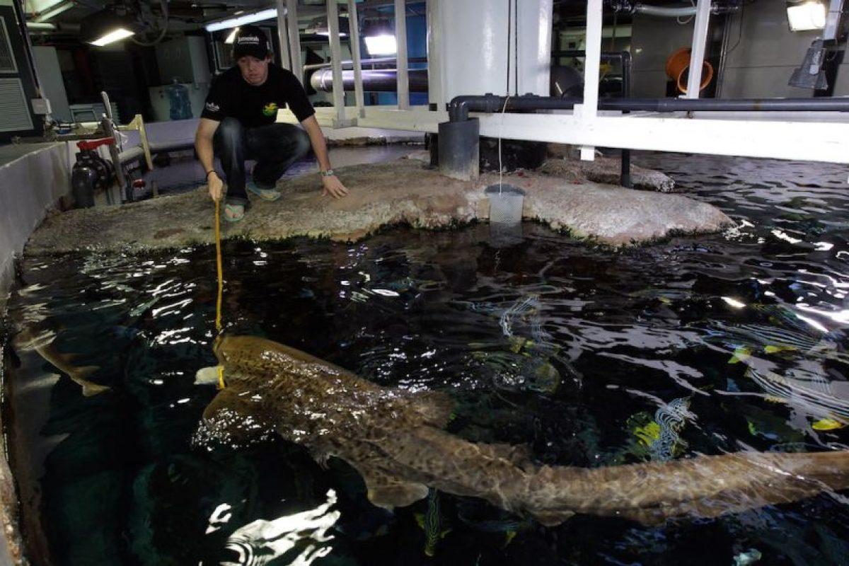"""El condado de Volusia en Florida, EEUU, es conocida como """"la capital de tiburones en el mundo"""". Foto:Getty Images. Imagen Por:"""
