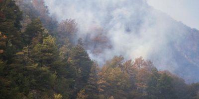 Incendio forestal en Cajón del Maipo moviliza a bomberos y Conaf