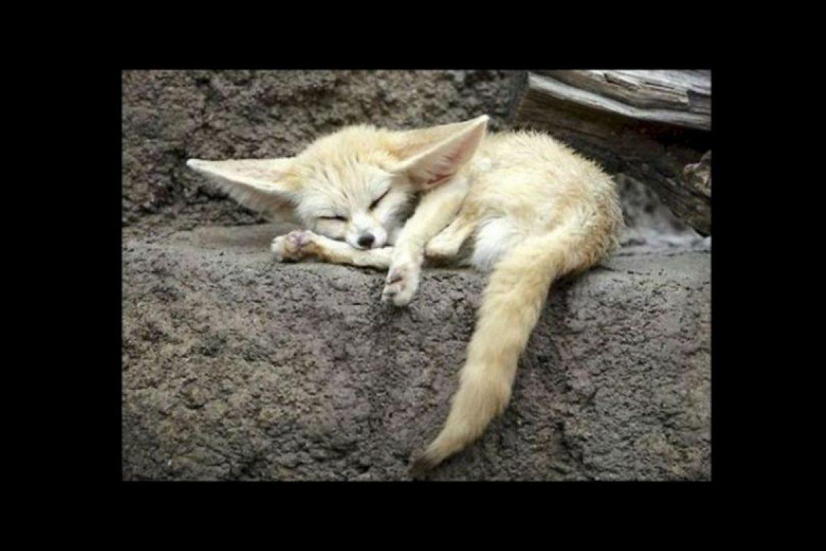 3- Dormir. El sueño fortalece la memoria, ya que -mientras dormimos- el cerebro reestructura y reorganiza nuestros recuerdos. Foto:Vía Tumblr.com. Imagen Por: