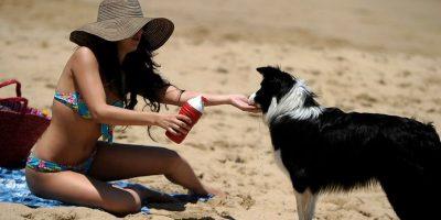¡Atención! Llevar mascotas a la playa puede derivar en una multa de hasta 5 UTM