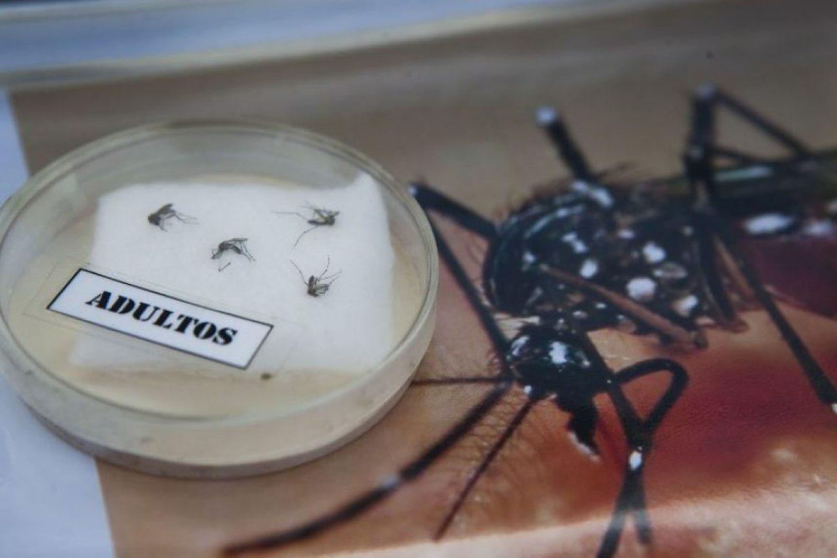 2. ¿Han existido brotes de Zika? Foto:AFP. Imagen Por: