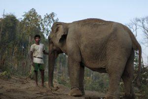 Los elefantes son los animales terrestres más grandes que existen en la actualidad. Foto:Getty Images. Imagen Por: