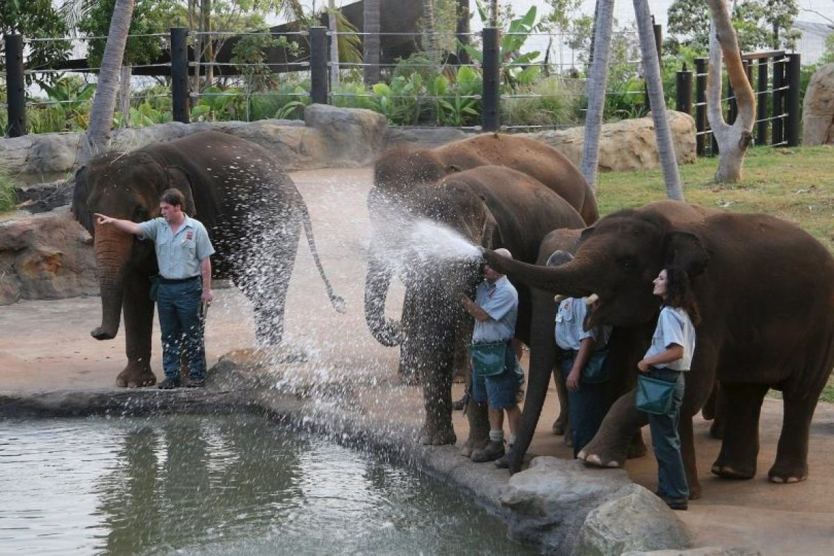 Su periodo de gestación es de 22 meses, el más largo en cualquier animal terrestre. Foto:Getty Images. Imagen Por: