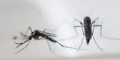 Alerta turistas en EEUU: detectan 3 casos importados de virus Zika en Florida