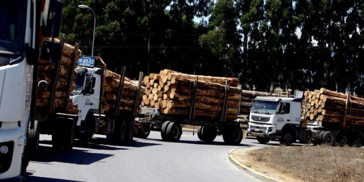 200 camiones bloquean acceso a Celulosa Arauco: este es su cuarto día de huelga