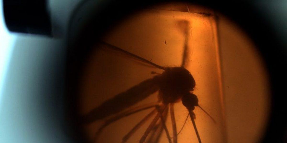 Miedo a microcefalia por el virus Zika reabre debate sobre aborto en Latinoamérica