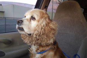 Un refugio de San Bernardino, California, mostró cómo la familia que la tuvo por esa época la abandonó y se fue con un cachorro. Foto:vía OC Small Paws So UT. Imagen Por: