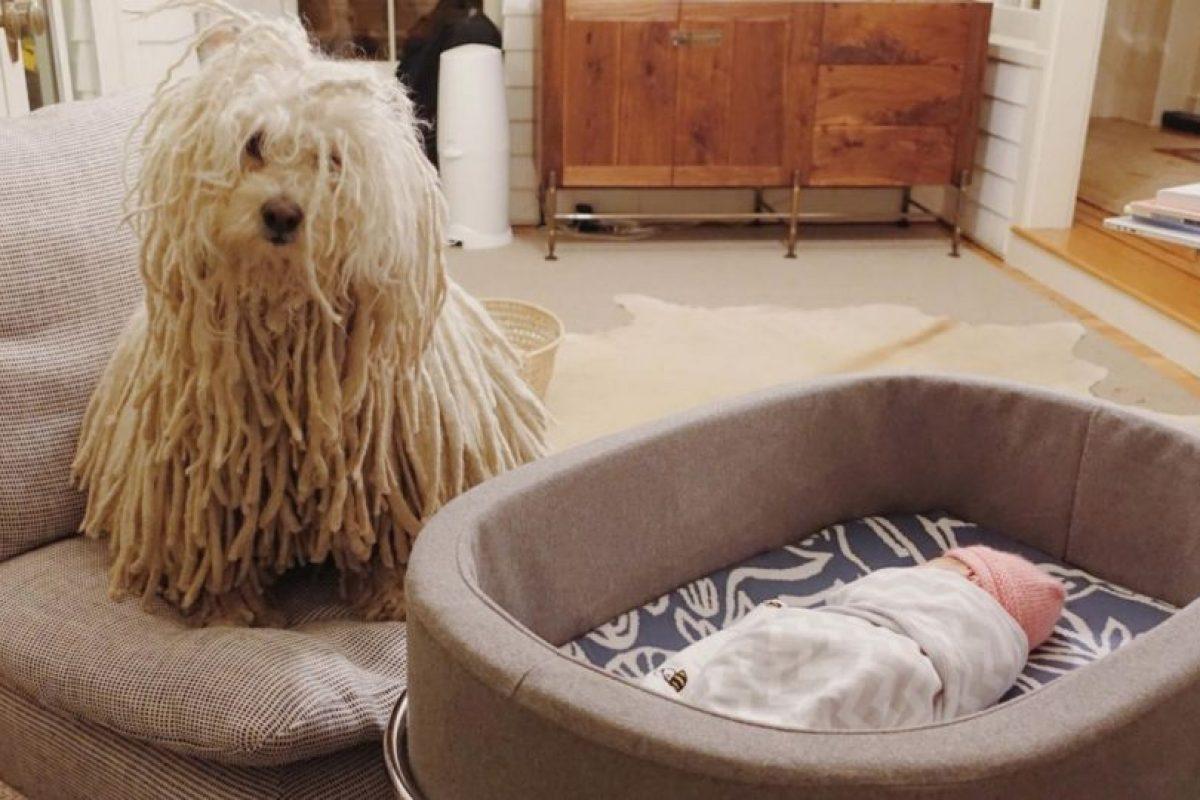 El perro también cuida a la pequeña. Foto:Vía facebook.com/zuck. Imagen Por: