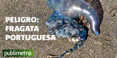 Infografía: Peligro, fragata portuguesa