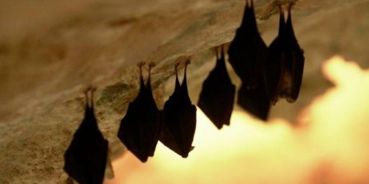 Perú: mueren de rabia 12 niños tras ser mordidos por murciélagos