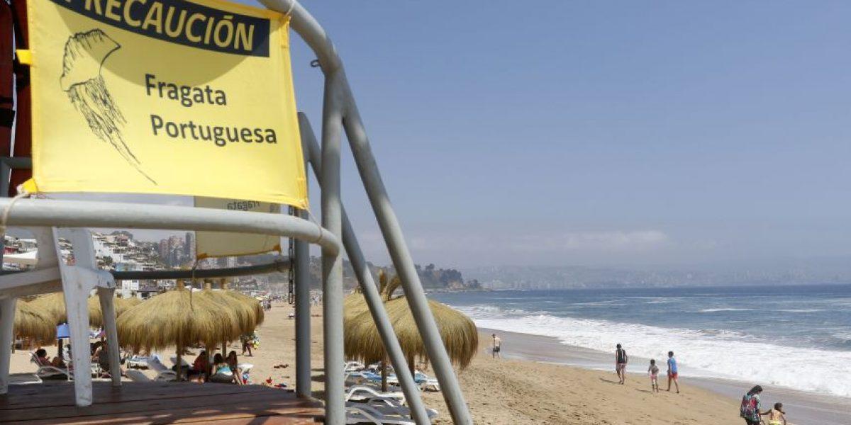 Afectados por la fragata portuguesa durante el verano se acercan a los 200
