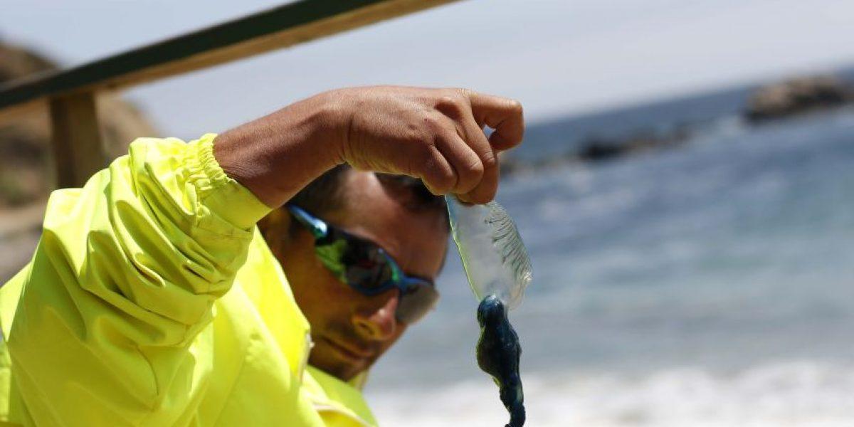 Levantan prohibición en playas de Viña del Mar y Valparaíso por fragata portuguesa