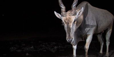 Video: La vida silvestre de África fue capturada con cámara escondida