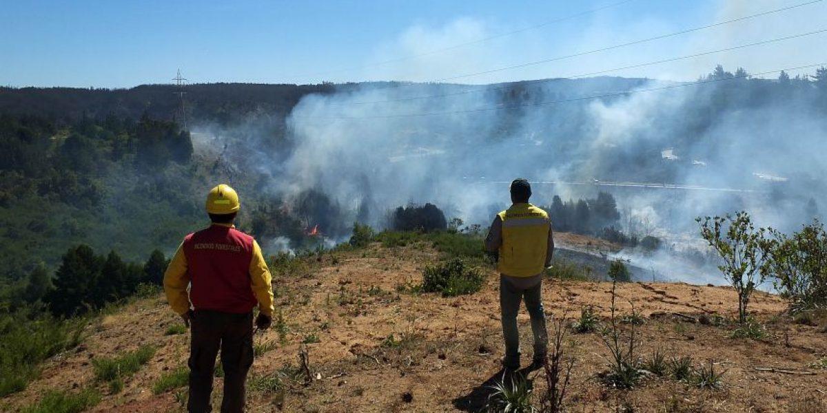 Decretan alerta roja por incendio forestal en el Maule que amenaza a viviendas