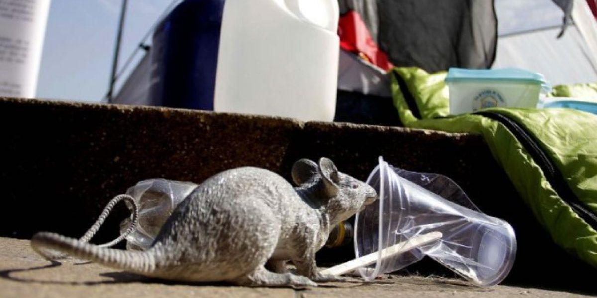 Coyhaique: fallece paciente presuntamente contagiado con virus hanta