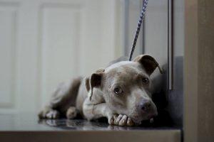 Incluso hay una campaña de recolección de fondos para pagar su tratamiento Foto:Facebook.com/GraniteHillsVet. Imagen Por: