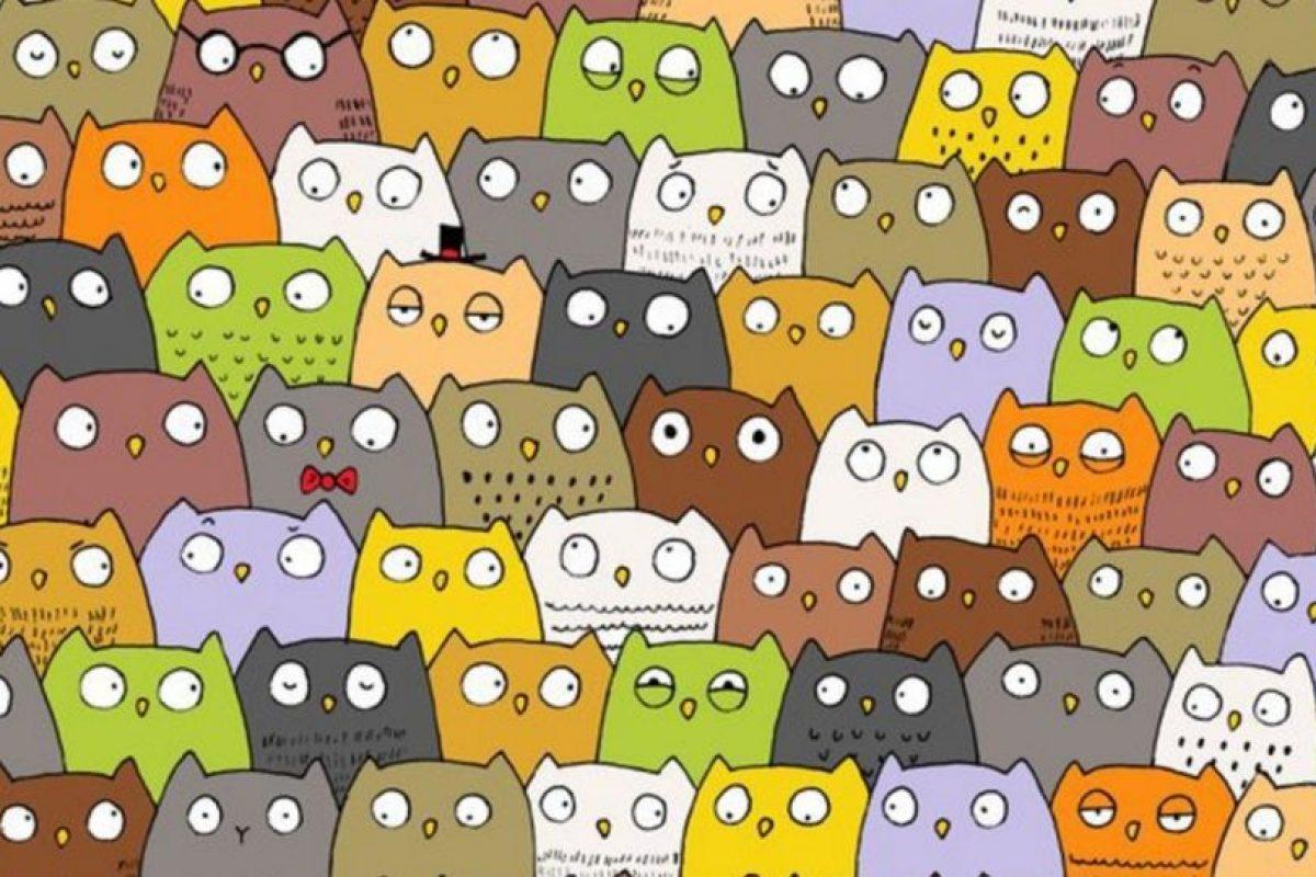 Un gato se esconde entre los búhos. Foto:Vía Twtter.com. Imagen Por: