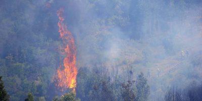 Decretan alerta roja por incendio forestal en Vichuquén