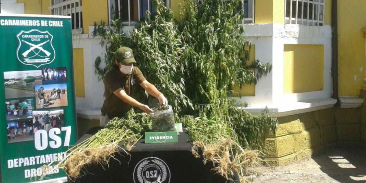 Carabineros incautó 16 kilos de marihuana que sería vendida durante el Festival de Viña