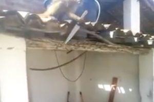 El mono amenazó a los comensales de un bar Foto:YouTube.com. Imagen Por: