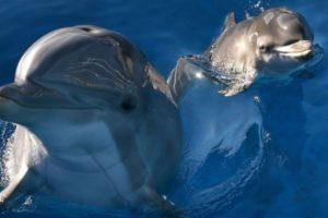 Hamas señaló que detuvo a un delfín espía proveniente de Israel. Foto:Getty Images. Imagen Por: