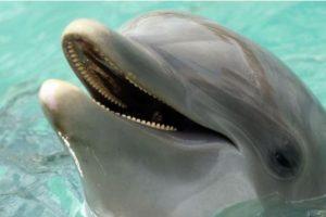 3. Delfines Foto:Getty Images. Imagen Por: