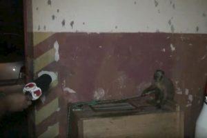 """Luego de ser """"detenido"""", fue entrevistado Foto:YouTube.com. Imagen Por:"""