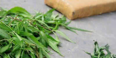 Curicó: PDI realizó la mayor incautación de plantas de marihuana del año