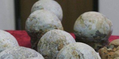 Condenan a un canadiense por vender fósiles de huevos de dinosaurio en una feria