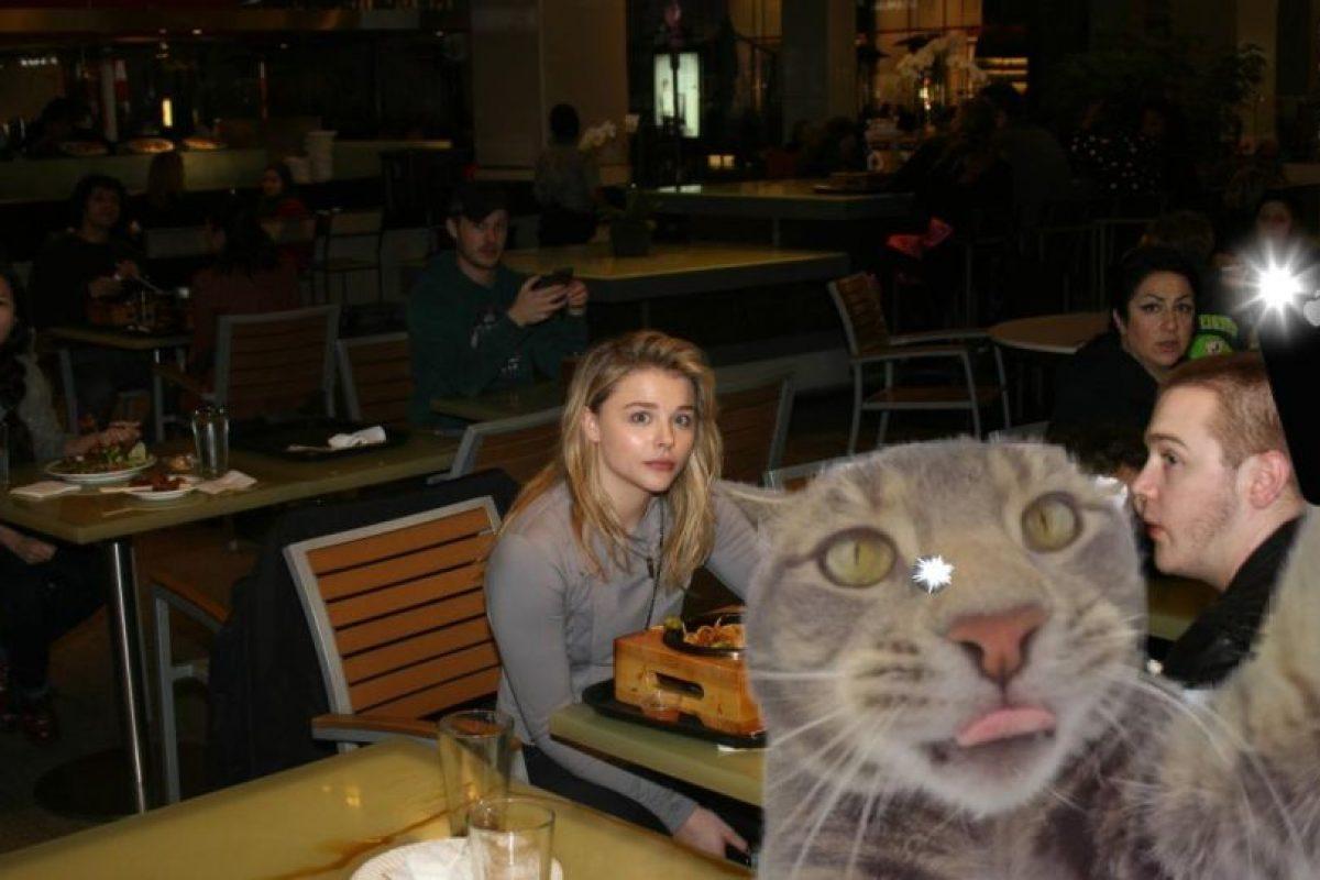 Un gato se tomó un selfie y así reaccionó Internet Foto:Imgur / Reddit. Imagen Por: