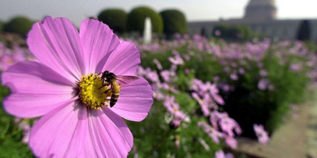 Amenaza para la agricultura mundial: disminución de abejas y otros polinizadores