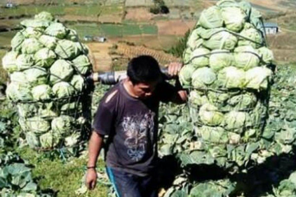"""""""Cabbage Man"""". Foto:vía Facebook. Imagen Por:"""