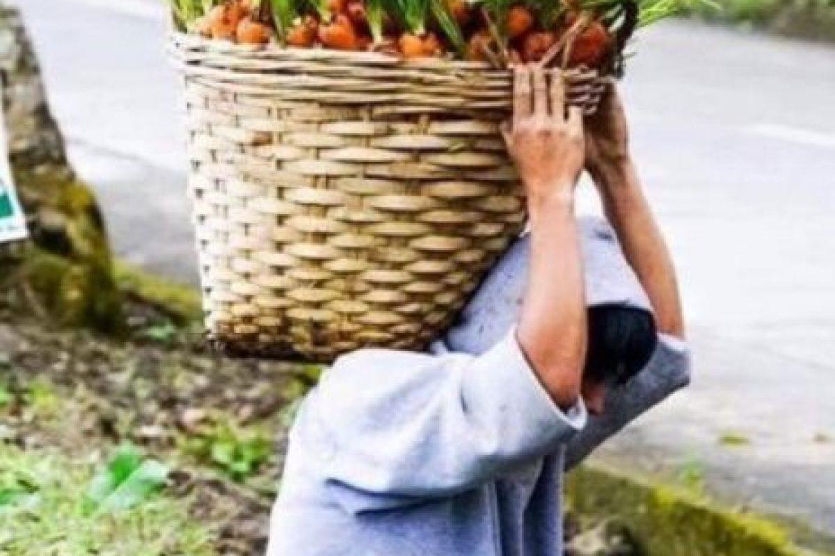 Carrot Man, el joven agricultor anónimo cuyas fotos se hicieron virales. Foto:vía Twitter. Imagen Por: