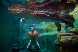 Crocosaurus Cove, Australia. Único lugar de buceo con cocodrilos en Australia. Crocosaurus Cove invita a los aventureros a experimentar su singular jaula de la muerte. Foto:Wikicommons. Imagen Por: