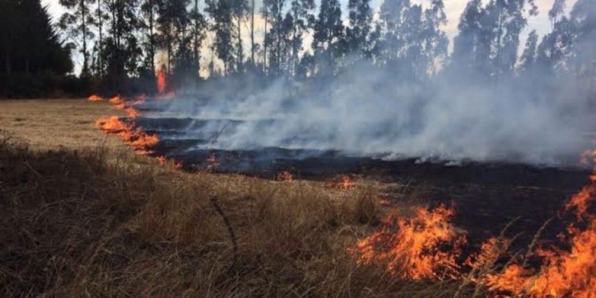 Declaran alerta amarilla para la comuna de Paredones por incendio forestal