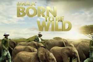 """Born to be Wild: IMAX (3D)"" – Disponible a partir del 27 de marzo.. Imagen Por:"