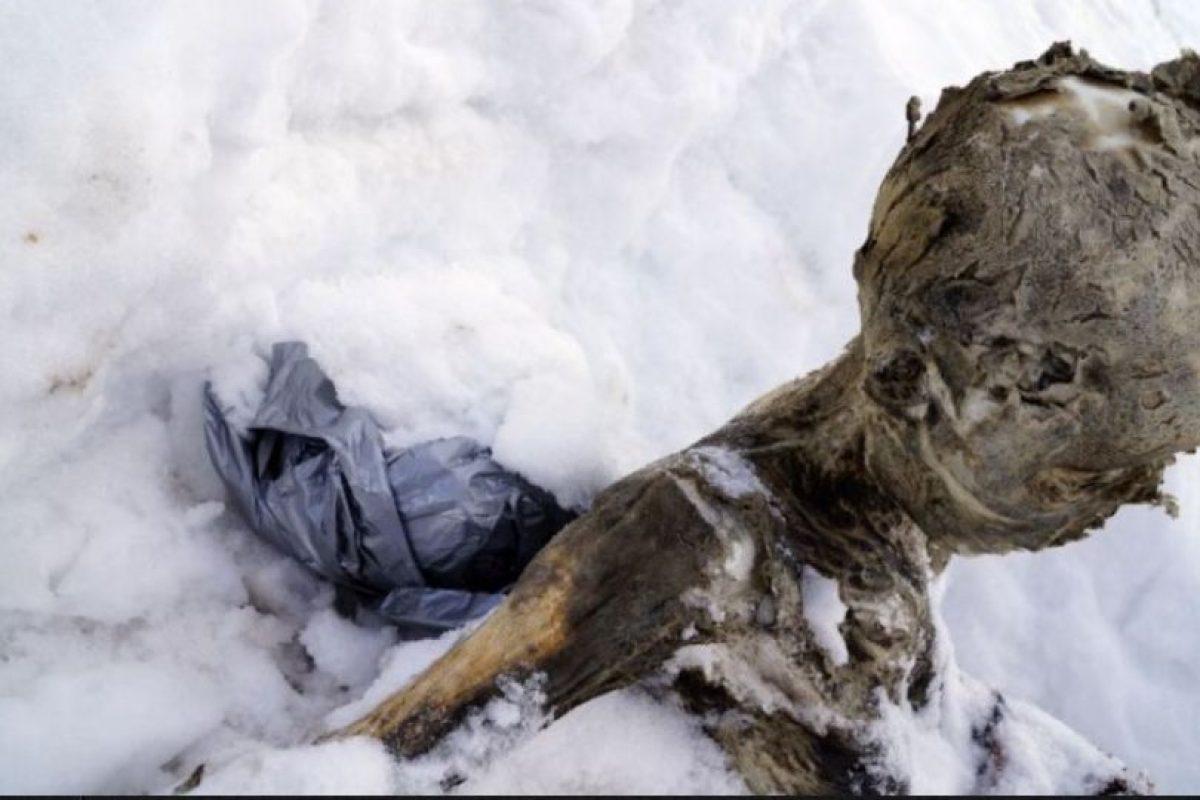– Existen procesos de momificación naturales y artificiales. Los primeros pueden ocurrir en diferentes contextos ya que también se pueden hallar en zonas secas. Foto:AFP. Imagen Por: