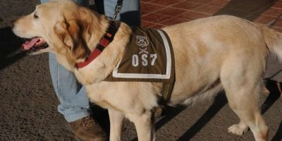 Santiago: Perro del O.S.7 decomisó $100 millones en marihuana prensada