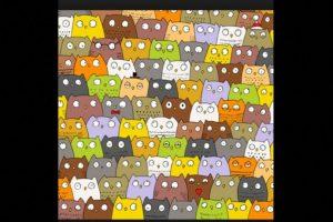 ¿Dónde está el gato? Foto:Vía Twitter. Imagen Por: