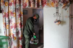 El virus es transmitido por el mosquito Aedes aegypti Foto:AFP. Imagen Por:
